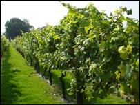 Вино по-английски, на английском языке (перевод)