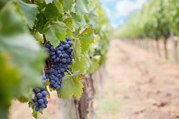 Российское вино вошло в топ-100 престижной премии