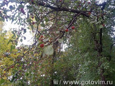 Творожная запеканка с яблочными розочками, Шаг 07
