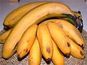 Карликовые и обычные желтые бананы
